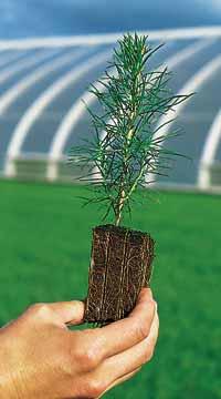 Mellanå Plant